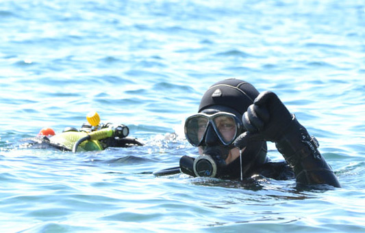 Abtauchen - Tauche mit uns in die wundervolle Unterwasserwelt.